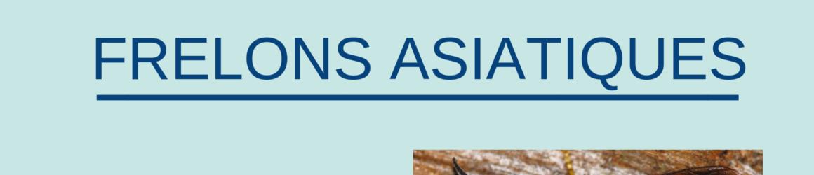 Procédure de signalement frelons asiatiques